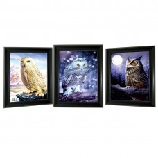 301 Owl  Tripple 3D Picture