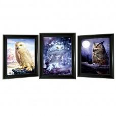 301 Owl  Tripple 3D Picture