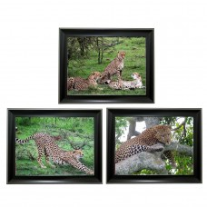 391 Leopard Tripple 3D Picture