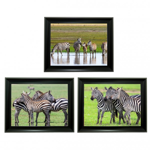 393 zebra Tripple 3D Picture