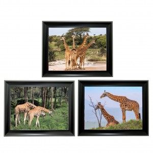 394 Giraffe  Tripple 3D Picture