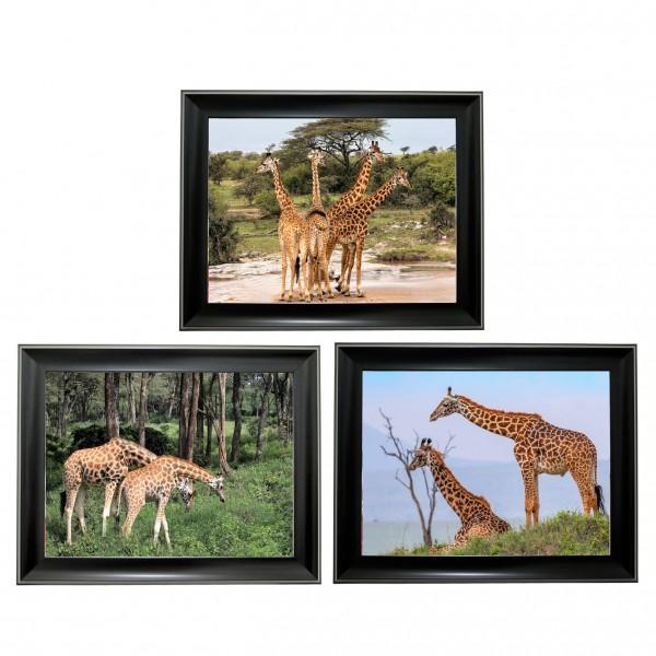 394 Giraffe  Tripple 3D Picture