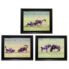 395 wildebeest  Tripple 3D Picture
