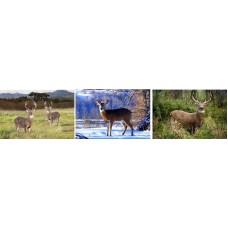 370 Deer 3D Triple Image