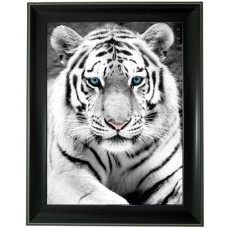 266 White Tiger 3D Picture