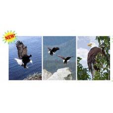 367 Eagle  3D Triple Image