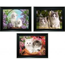 303 Kitten 3D Lencticular Picture