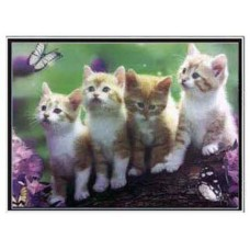 402079 Kitten 3d picture size 18x25