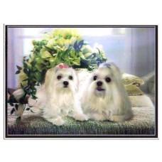 """6015 Puppie 3D Lenticular w/ frame  size 27"""" x 35"""""""